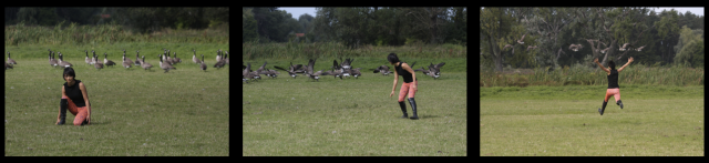 geese sequence